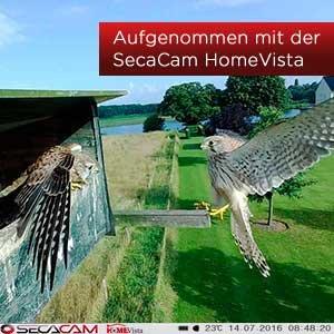 Aufnahme eines Vogels